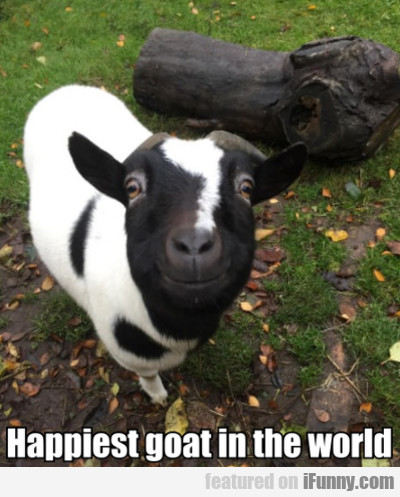 Happiest Goat In The World