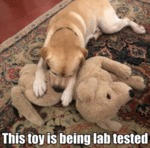 This Toy Is Being Lab Tested