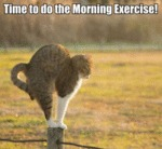 Time To Do The Morning Exercise!