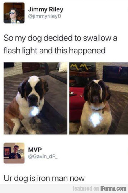 So My Dog Decided To Swallow A Flash Light And...