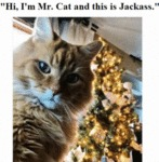 Hi, I'm Mr.cat And This Is Jackass