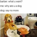 Barber: What U Want? Me: Why Are U A Dog?