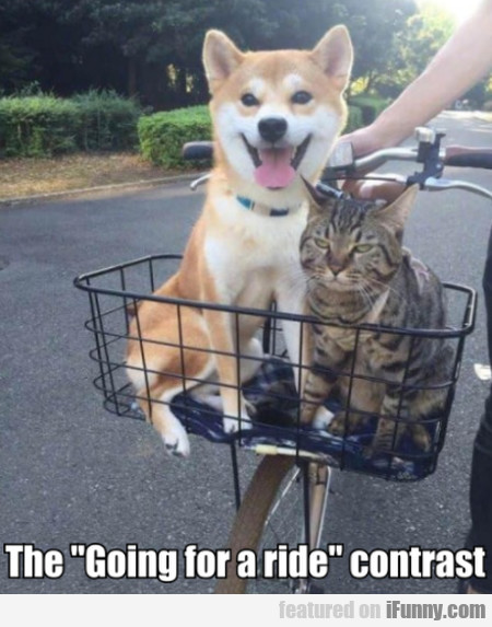 """The """" Going For A Ride """" Contrast"""
