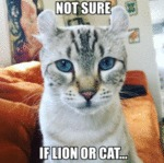 Not Sure If Lion Or Cat