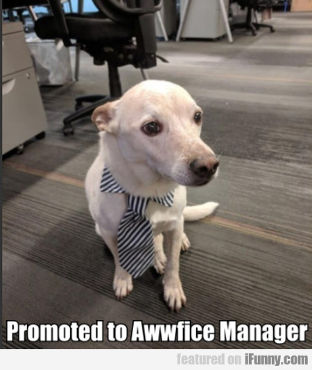 Promoted To Awwfice Manager