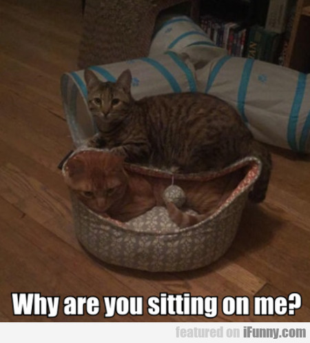 Why Are You Sitting On Me?