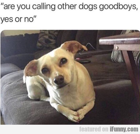 Are You Calling Other Dogs Goodboys Yes Or No