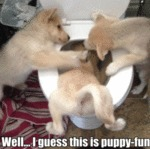 Well... I Guess This Is Puppy-fun