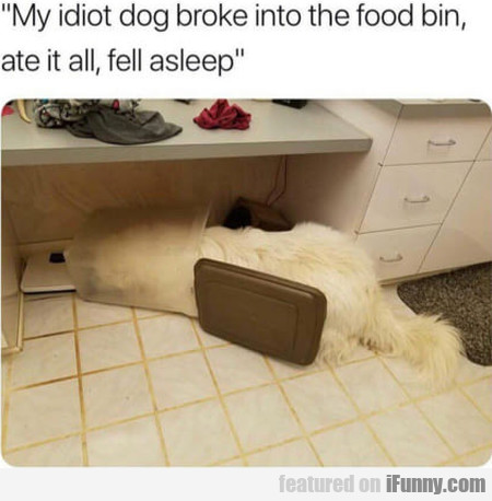 My Idiot Dog Broke Into The Food Bin, Ate It...