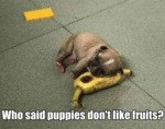 Who Said Puppies Don't Like Fruits