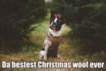 Da Bestest Christmas Woof Ever