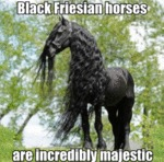 Black Friesian Horses Are Incredibly Majestic