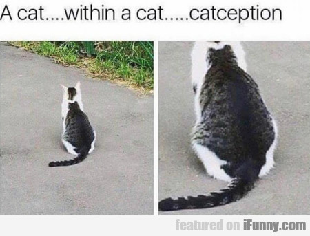 A Cat.... Within A Cat.....catception