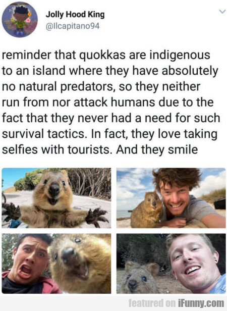 Reminder That Quokkas Are Indigenous To An...