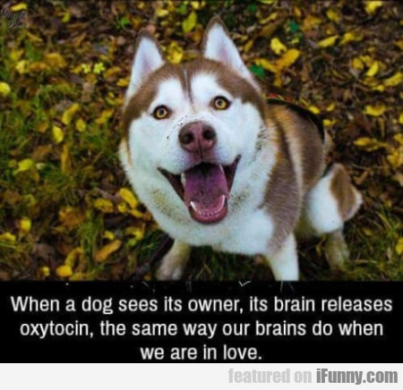 When A Dog Sees Its Owner, Its Brain Releases...