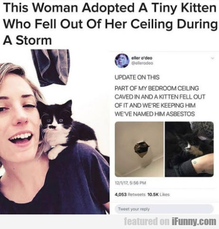 This woman adopted a tiny kitten who fell out...