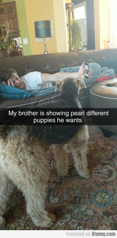 My Brother Is Showing Pearl Different Puppies...