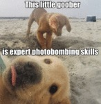 This Little Goober Is Expert Photobombing Skills