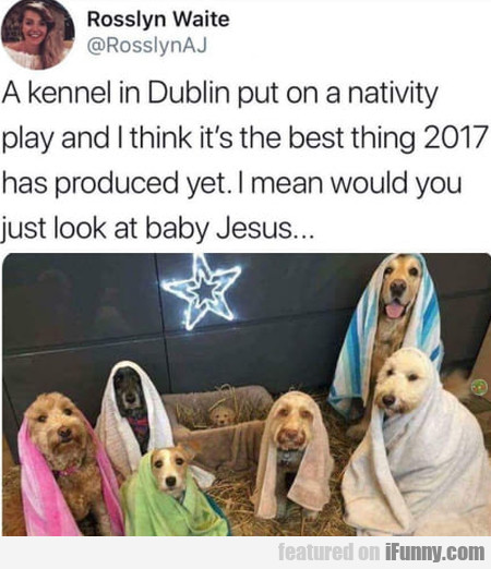 A Kennel In Dublin Put On A Nativity Play And...