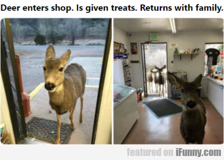 Deer Enters Shop. Is Given Treats. Returns With...