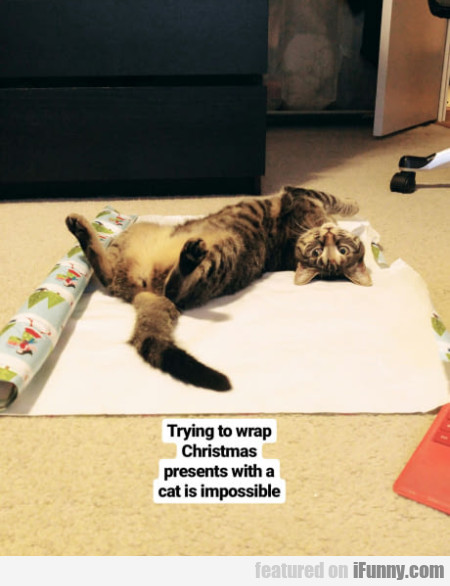 Trying To Wrap Christmas Presents With A Cat...