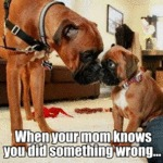 When Your Mom Knows You Did Something Wrong...