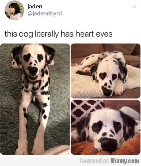 This Dog Literally Has Heart Eyes