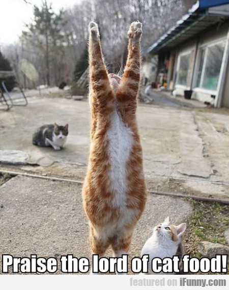 Praise the lord of cat food!