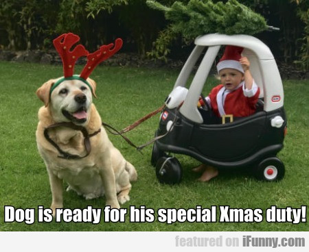 Dog is ready for his special Xmas duty