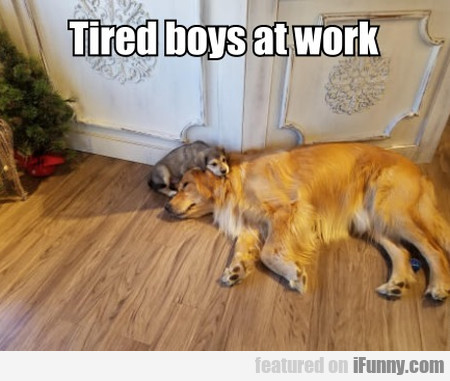 Tired Boys At Work