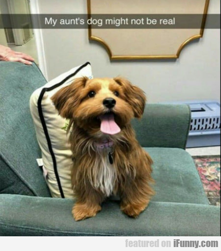 My Aunt's Dog Might Not Be Real