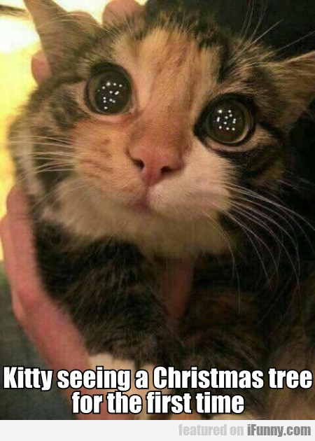Kitty Seeing A Christmas Tree For The First Time