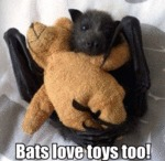 Bats Love Toys Too!