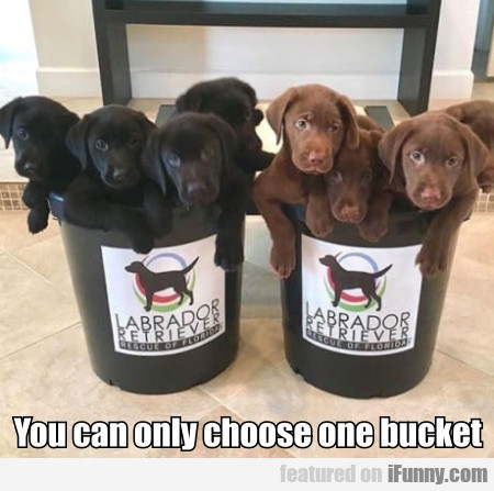 You Can Only Choose One Bucket
