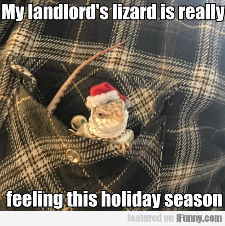 My Landlord's Lizard Is Really Feeling This...