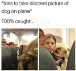 Tries To Take Discreet Picture Of Dog On Plane...