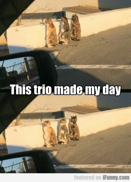 This Trio Made My Day