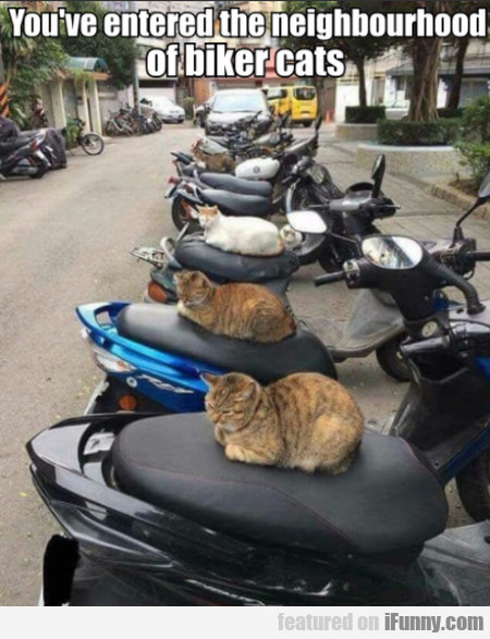 You've Entered The Neighbourhood Of Biker Cats
