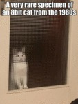 A Very Rare Specimen Of An 8bit Cat From The 1980s
