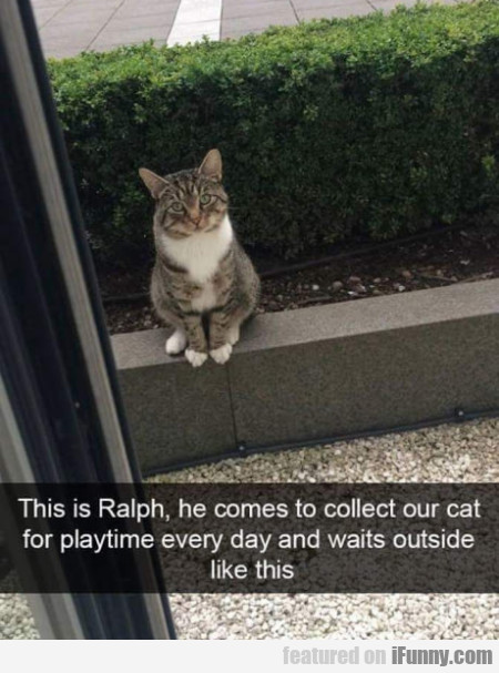 This Is Ralph, He Comes To Collect Our Cat For...