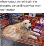 When You Put Something In The Shopping Cart And...