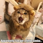 Apparently I've Got A Little Simba