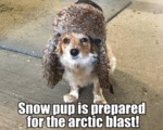 Snow Pup Is Prepared For The Arctic Blast!