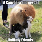A Capybara And My Cat - Unlikely Friends
