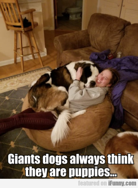 Giants Dogs Always Think They Are Puppies