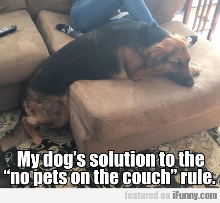 "My Dog's Solution To The ""no Pets On The Couch""..."