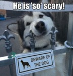 He Is 'so' Scary! - Beware Of The Dog