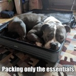 Packing Only The Essentials