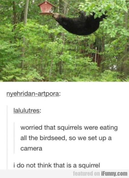 Worried That Squirrels Were Eating All The...