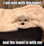 I Am One With The Towel And The Towel Is With Me